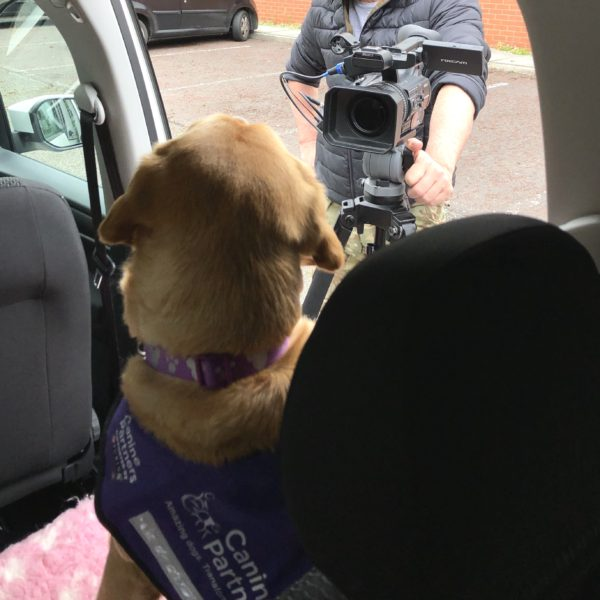 Fox red assistance dog sitting inside a Volkswagen Caddy Maxi. A cameraman is standing to the left-hand side filming her dog bed and seatbelt.